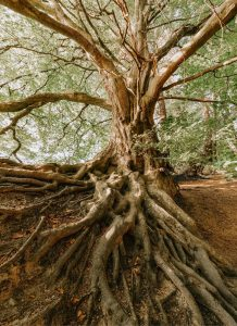 Living for Christ as a Youth 1: Rooted in Christ