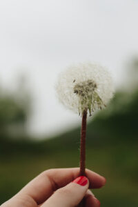 Read more about the article Relationship Weeds 4: Dishonesty