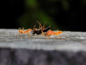 Read more about the article Lessons from Nature 3:  A Life of Labor – The Ant