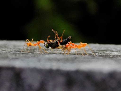 You are currently viewing Lessons from Nature 3:  A Life of Labor – The Ant