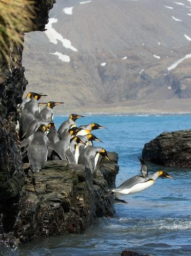 Read more about the article Lessons from Nature 5:  Not Of the World, But In the World – The Penguin