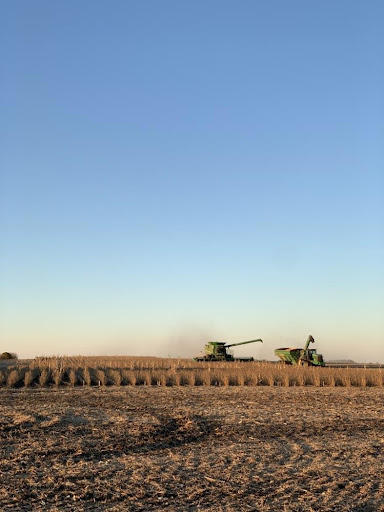 Read more about the article Life on the Farm 4: Harvest Time