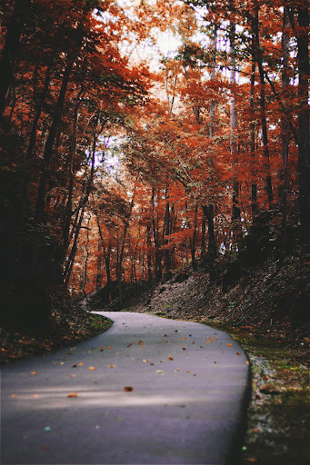 Read more about the article Seasons of Our Faith 3: Fall: Harvesting Our Faith